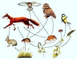 Что вы знаете о цепях питания животных?