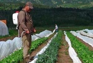 Особенности обработки семян и растений пестицидами