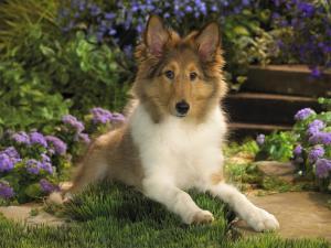 Пироплазмоз у собак - что это и как его лечить?