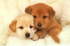 Ветеринарная клиника и ее роль в воспитании щенка